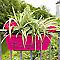 Jardinière à réserve d'eau + support pivoine 50 cm