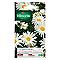 Graines Chrysanthème des Près Grande Marguerite Margo