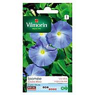 Graines d'Ipomée Grande Fleur Bleue Vilmorin