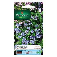 Graines de Myosotis des Alpes Bleu Vilmorin