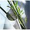 Feutre anti-racines 0,75 x 2,5 m