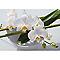 Toile sur châssis Orchidée 45 x 65 cm