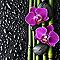 Toile imprimée Orchidée violine 30 x 30 cm