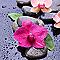 Toile imprimée Orchidée fuschia 30 x 30 cm