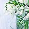 Toile imprimée Perce-neige 30 x 30 cm
