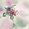 Toile Imprimée Coeur de fleur 30 x 30 cm
