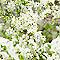 Papier peint papier sur papier SUPERFRESCO Duplex fleur pommier vert