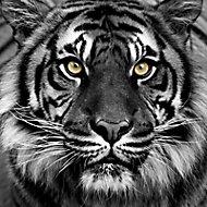 Toile sur châssis Tigre 57 x 57 cm