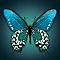 Toile imprimée Papillon 75 x 75 cm