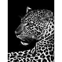 Toile imprimée Jaguar N&B 80 x 60 cm