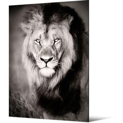 Toile Lion 65 X 90 5 Cm Castorama
