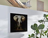 Tableau en verre éléphant 50 x 50 cm