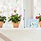 Sticker vitres XL Trois géraniums