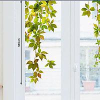 Sticker vitres XL Vigne vierge