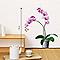 Sticker mur Orchidée rose