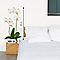 Sticker mur Orchidée blanche