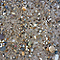 Vrac Mélange sable et gravier +/-1m3