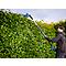Taille-haie sur perche sans fil Erbauer 18 V 45 cm