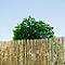 Brise vue naturel paillon pelé 3 x h.1,5 m