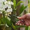 Ciseaux de jardin Durum GoodHome 14 x 3,6 cm
