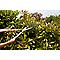 Cisaille à haies Durum GoodHome 58,5 x 20,3 cm