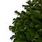Sapin naturel Nordmann enraciné 80/100 cm