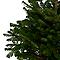 Sapin naturel Nordmann enraciné 120/150 cm