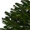 Sapin naturel Nordmann rempoté 80/100 cm