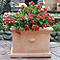 Pot carré terre cuite Blooma Mali effet blanchi 35 x 35 x h.25 cm