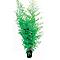 Bambou Auréa