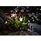 4 balises solaires à piquer LED Blooma Kitmat blanc froid + RVB H.38,8 cm