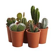 Composition de cactus 17cm