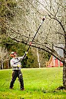 Taille haie sur perche électrique Oregon PS750 - 750W 20cm