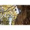 Caméra IRP Chacon intérieur et extérieur 720p