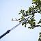 Coupe branche télescopique + scie Fiskars