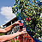 Pince de jardin RAPID GP238 28 x 5 x 32cm