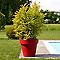 Pot rond plastique EURO3PLAST Ikon rouge orient ø120 x h.107 cm