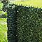 Ecran de verdure pvc 195 brins 3 x h.1 m