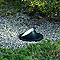 Spot extérieur à enterrer AKANUA Vario mini orientable noir/inox mat