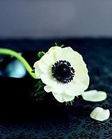 Affiche Flower format 24 x 30 cm