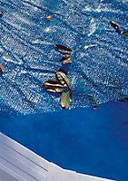 Bâche à bulles 180µ Gré pour piscines acier Ø3,50/3,60m