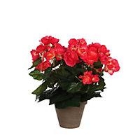 Begonia rose foncé artificiel ø25 x h.30 cm en pot Stan gris ø11,5 cm