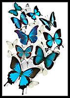 Cadre vitrine Papillons 50 x 70 cm