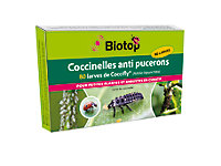 Coccinelles Coccifly Biotop (80 larves)