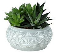 Ensemble de succulentes, pot 14cm