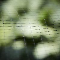 Filet de protection oiseaux et feuilles pour bassin, maille 12 x 12 mm Verve 2 x 4 m