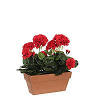 Geranium rouge articiciel en jardinière terra 29 x 13 x h.40 cm