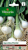 Graines d'Oignon Blanc Premier Vilmorin