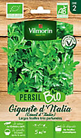 Graines de Persil géant Italie Bio