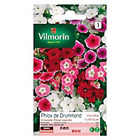 Graines de Phlox de Drummond Grande Fleur Variée Vilmorin